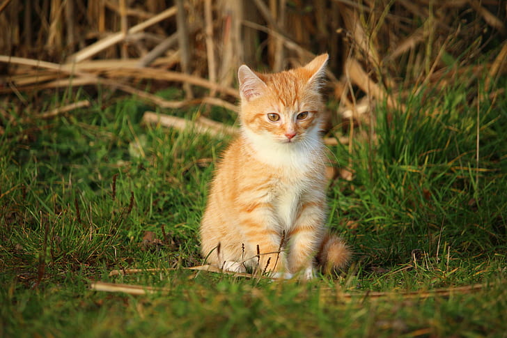 orange cat on grass