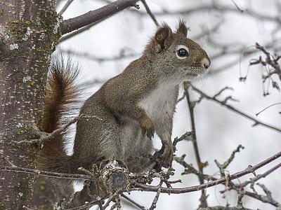 beige squirrel standing on tree branch
