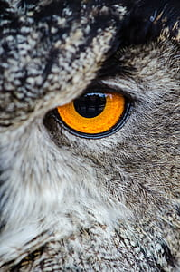 owl eye photogrpahy