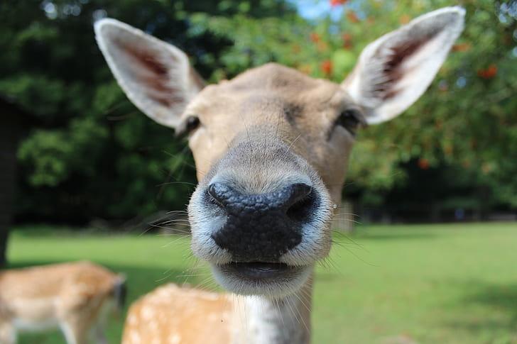 brown deer selective focus photography