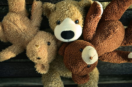 three brown bear plush toys