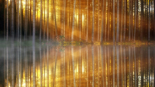 sunlight passed through birch trees beside the river