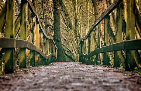 green and brown wooden bridge under trees at daytime