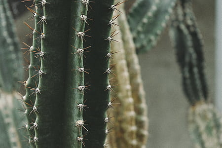 Macro Shot of Cactus