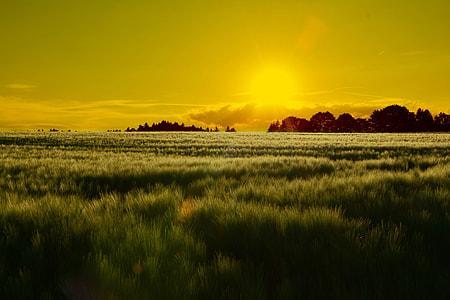 photo of green grass on sunrise