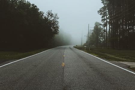 landscape photo of black concrete road between green leaf trees
