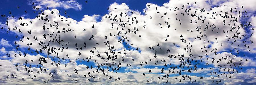 flock of birds under cloudy sky