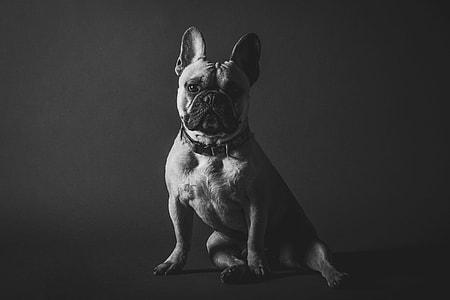 Portrait shot of a dog