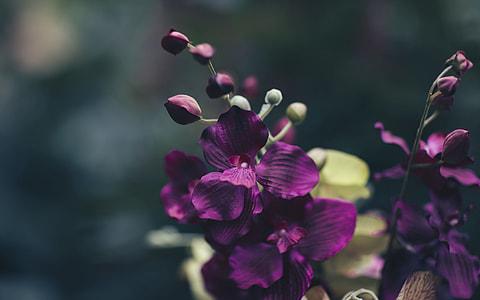 Dark little beautiful things