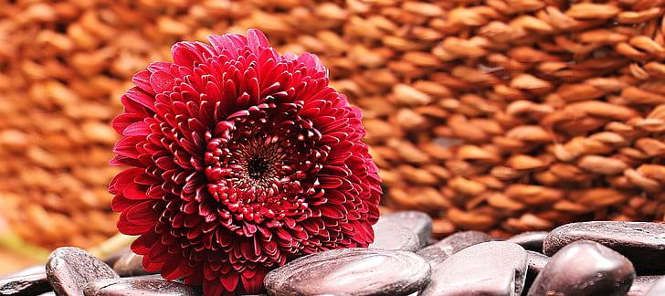 red petaled flower on gray rocks