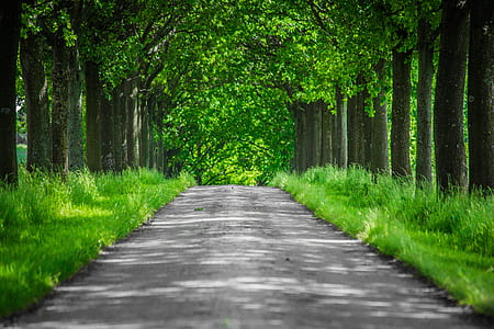 grey concrete road with trees