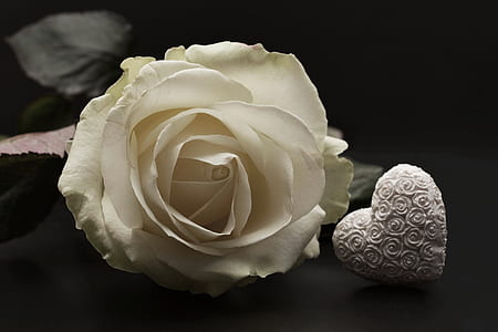 white rose and holly kalp party favor