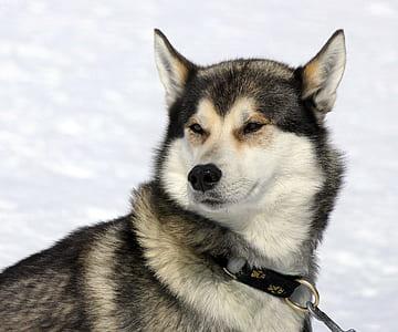 black and white Eskimo on snow filled land