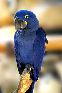 selective photography of blue parrot perching on brown tree branch