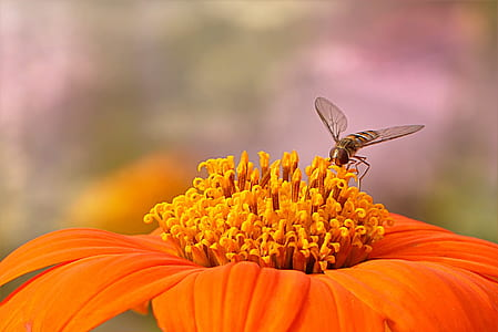micro photography of orange petaled flower