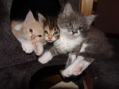 three assorted kittens