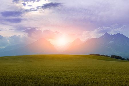 green lawn grass during sunset