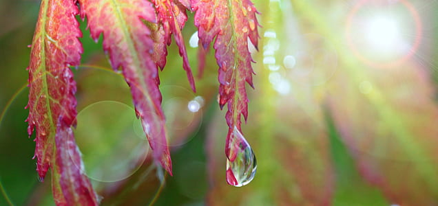 water droplet on pink leaf closeup photo