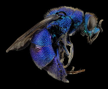 Blue and Black Flying Insects