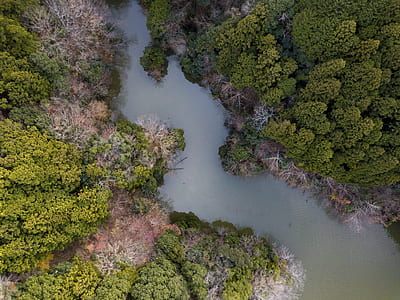 trees beside a river aerial low-angle photography at daytime