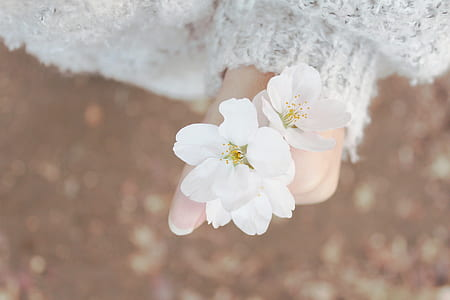 selective focus photography of person holding cluster of two white petaled flowers