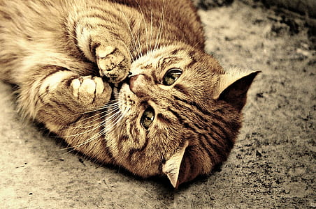 close-up photo of brown tabby cat lying on ground