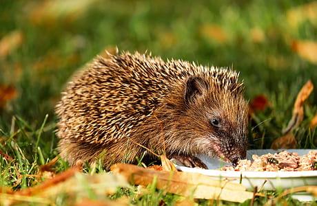 brown animal eating on white plate