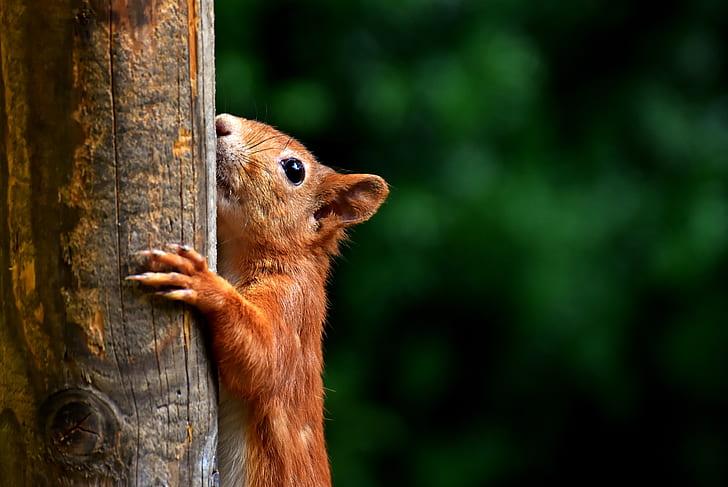brown chipmunk on brown wood during daytime