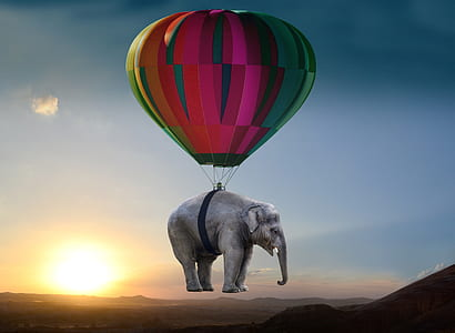 elephant balloon photo