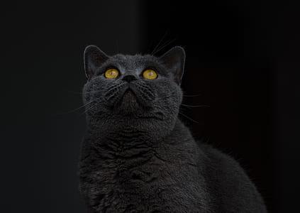 black fur cat