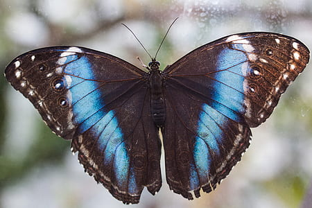 black and blue butterfly in close-up photography