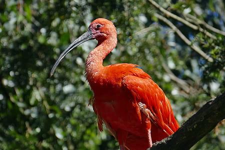 orange belly long-beaked bird perching on tree branch