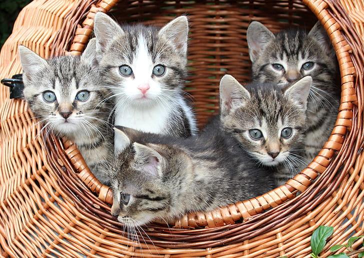 five gray tabby kittens on brown wicker basket