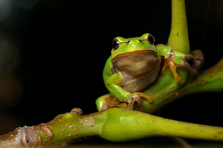 green frog on green plant in macro shot