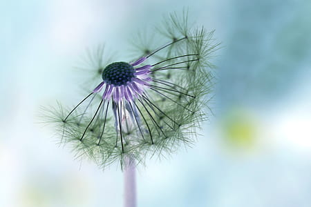 selective focus photography of dandelion flower