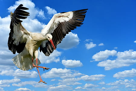 time lapse photography of white stork
