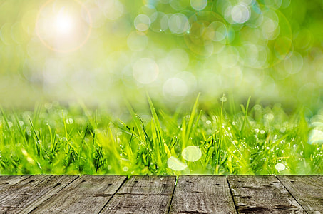 green grasses digital wallpaper