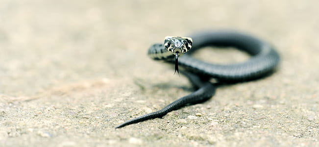 selective focus photography of black snake on ground