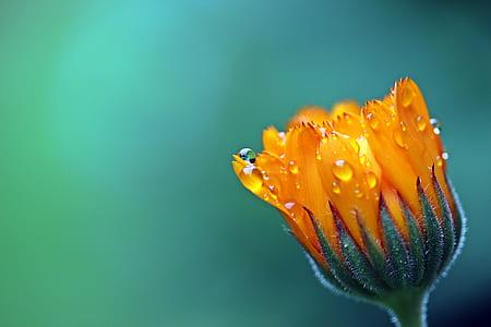 orange daisy selective-focus photography