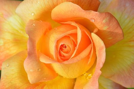 macro photography of orange petaled flower