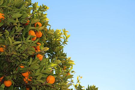orange tree during daytime