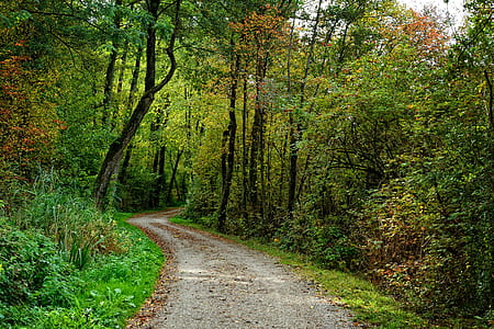road between green leafed trees during daytime