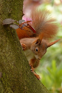 brown and white squirrel on tree branch
