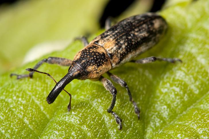 black and brown weevil on green leaf