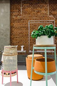 Plants in flowerpots on an exhibition