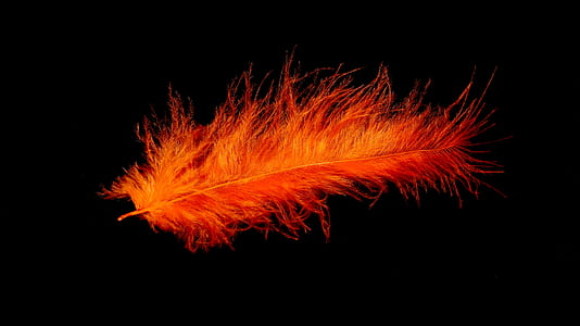 orange feather