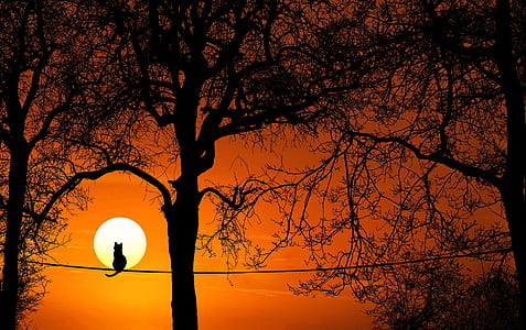 silhouette of a cat sitting on rope near trees
