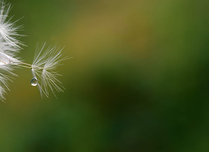 white feather and water drop