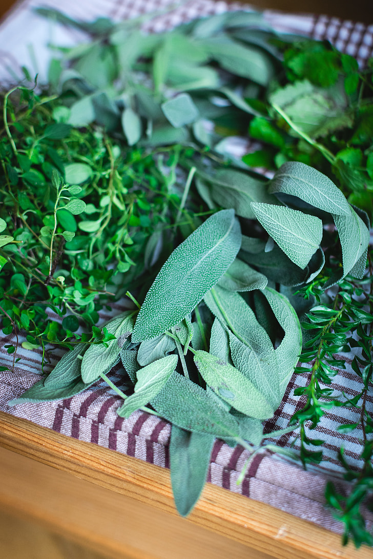 Different kinds of fresh herbs
