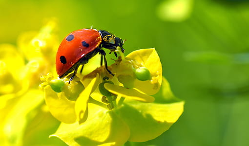 ladybug perching on yellow flower